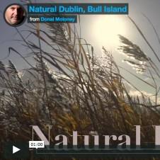 Natural Bull Island